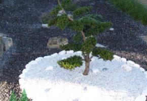 Bonsai- und Einzelpflanzen