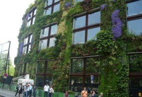 Fassadenbegrünung & Kletterpflanzen